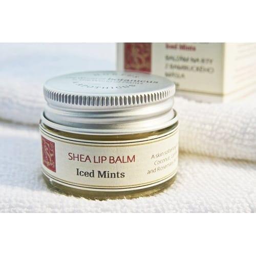Shea Lip Balm
